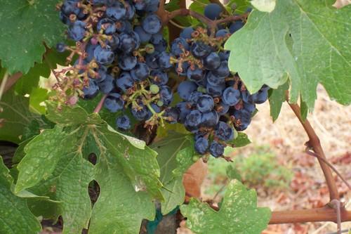 022mondavi_winery14